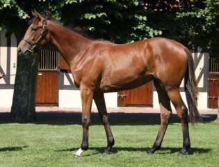 Galileo-x-Royal-Highness-filly_2