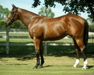 horse1-300x240