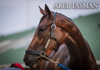 Abel Tasman-front