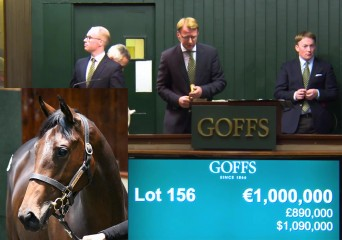 goffs sale front