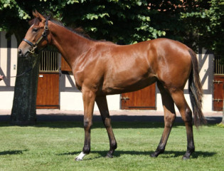 Galileo x Royal Highness filly-1