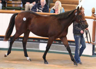 Montjeu-x-First-Breeze-colt