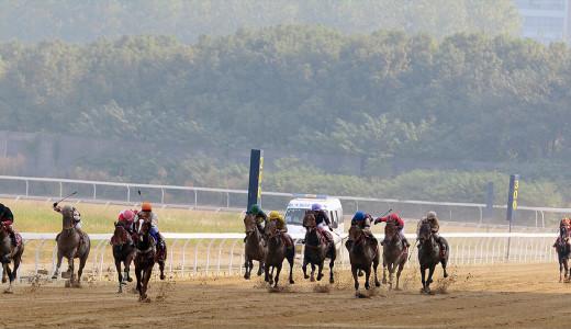 第十二届中国 ●武汉国际赛马节