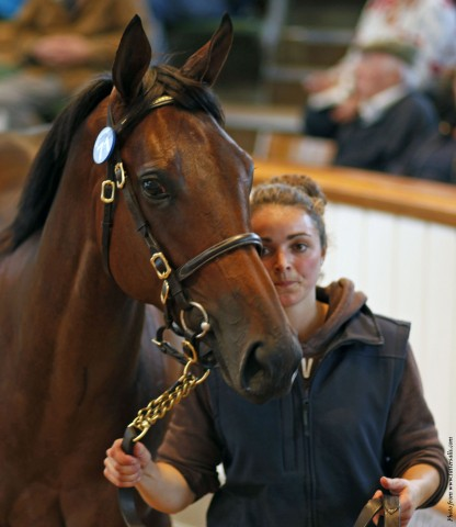 Lot 71 TBK1 3877©Tattersalls.com