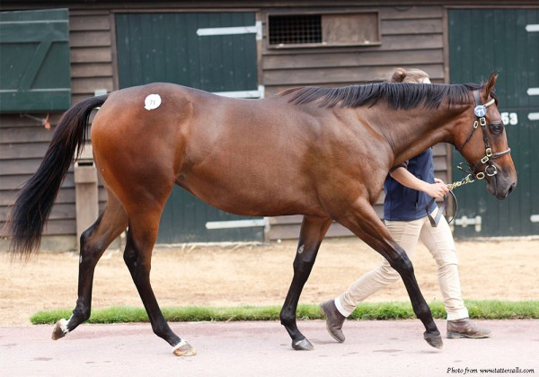 Lot 71 TBK1 3917©Tattersalls-front