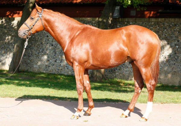lot 255 Galileo Colt-front