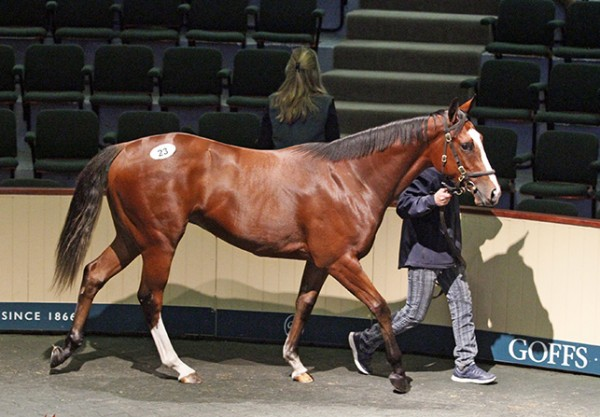 Frankel X Alexander Goldrun filly  Lot 23 -1