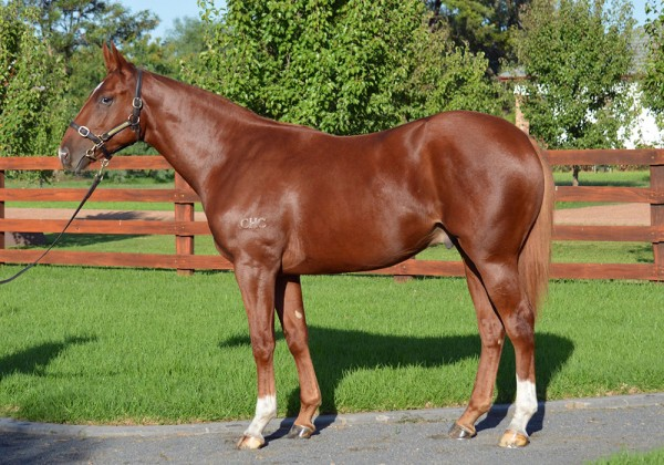 Fratelli as a yearling-front